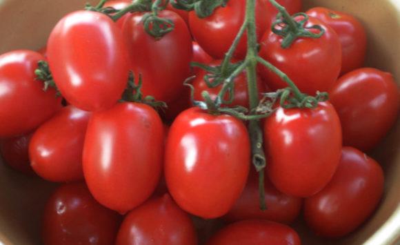 Il Pomodoro Vesuviano o Piccadilly, come coltivarlo e cucinarlo